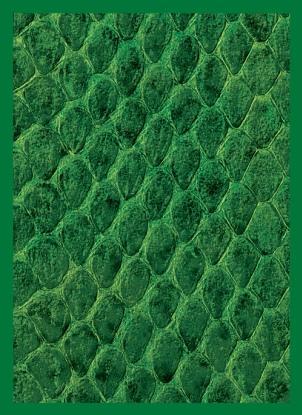 Legion: Dragon Hide - Green Deck Protectors (50)