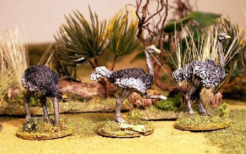 28mm Modern: North Star Africa - Ostrich (3)