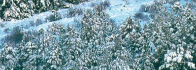 Water Effects: Foam/Snow, 32ml